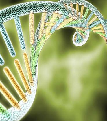 Genome Sequencing Technology Becoming More Efficient