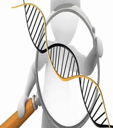 An Insight into What Genome is