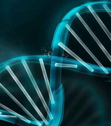 What You Should Know Aboutthe Human Genome
