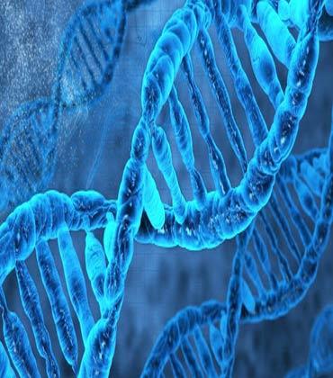 Key Biotechnology Applications
